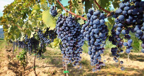 Halal-wijn populair op landbouwbeurs